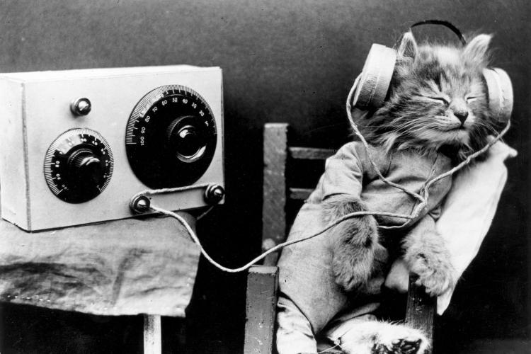 sound-cat